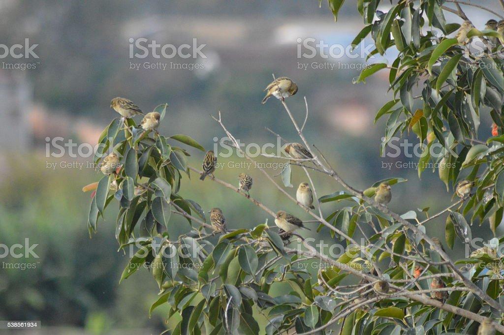 Des oiseaux sur une branche stock photo
