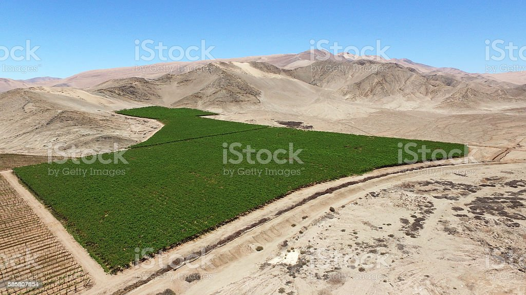 desert agriculture stock photo