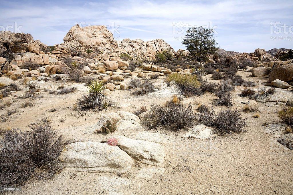 Desert and Rocks royalty-free stock photo