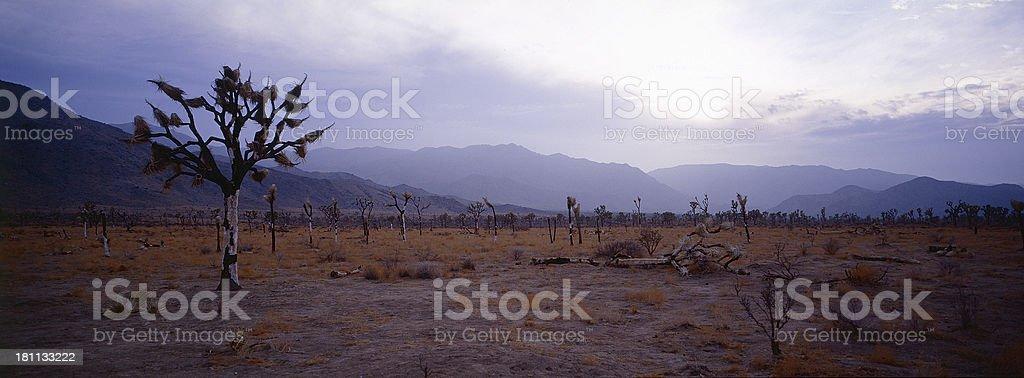 Desert at Dawn royalty-free stock photo