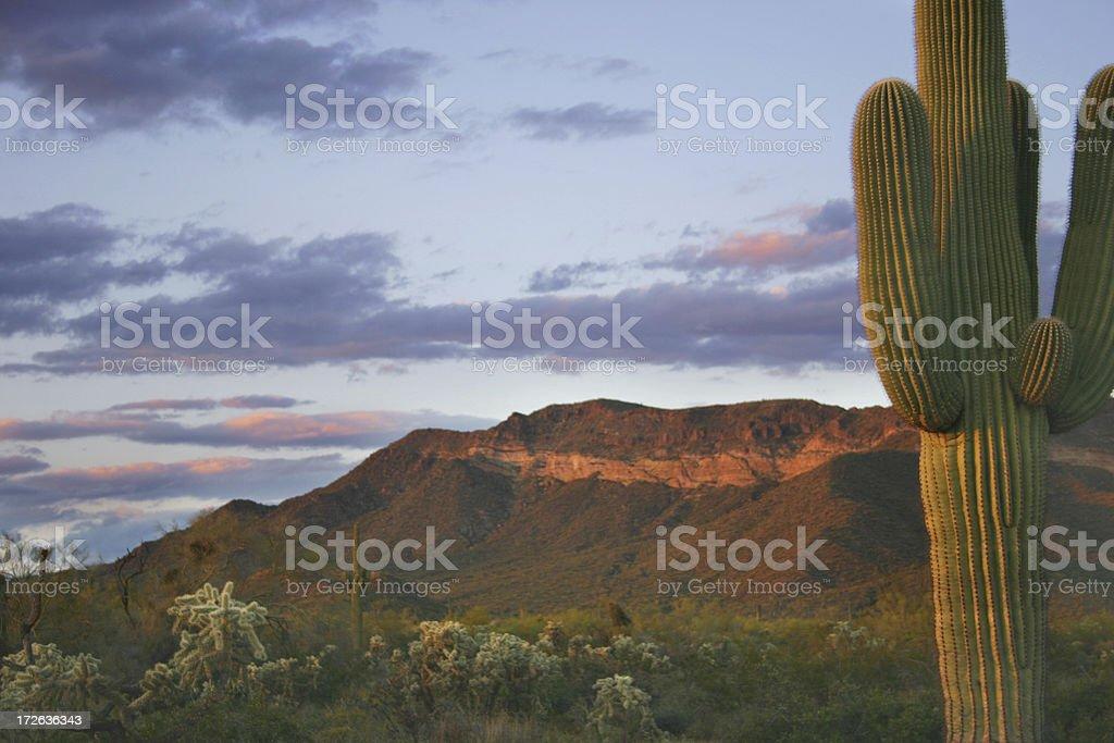 Desert at dusk stock photo