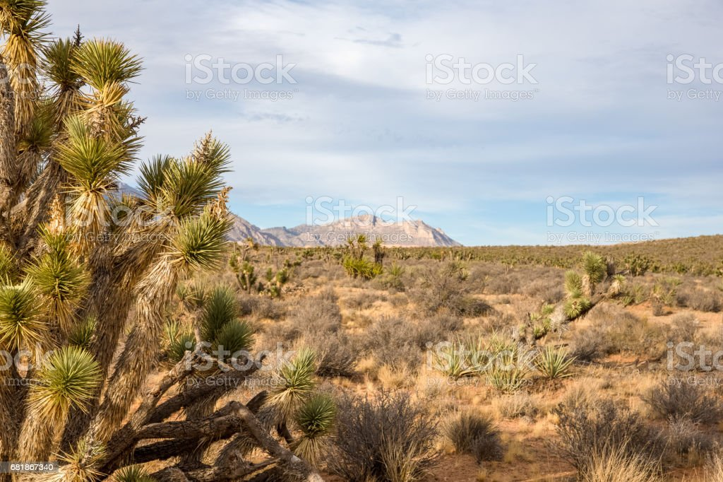 Desert Background with Copy Space stock photo