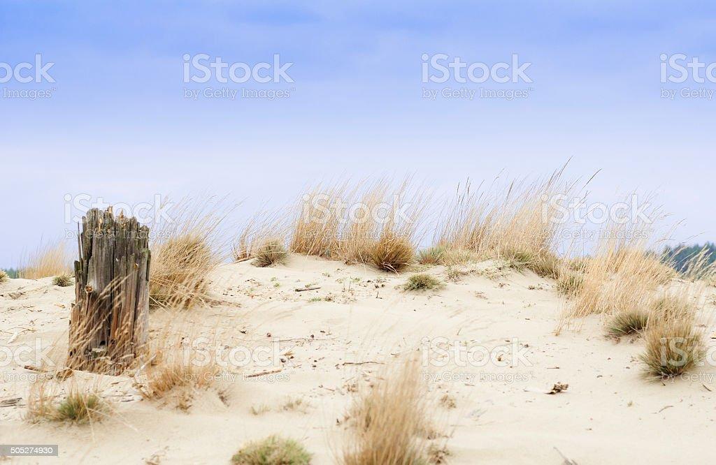 砂漠 błędowskaでポーランド ロイヤリティフリーストックフォト