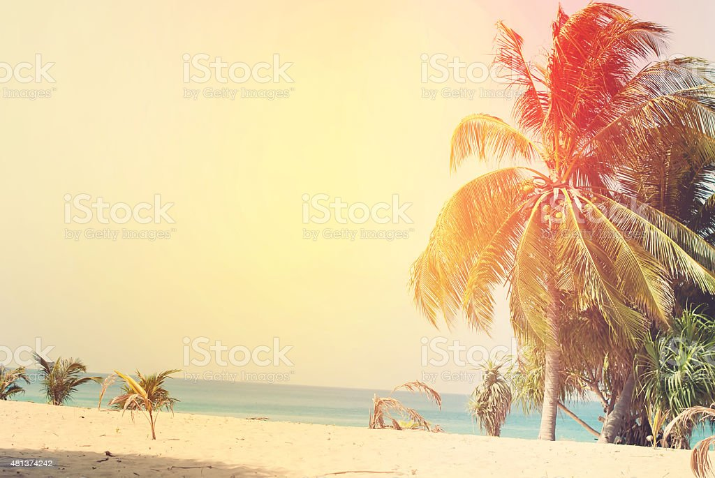 Desert Beach with Palm Trees lit by the Sun stock photo