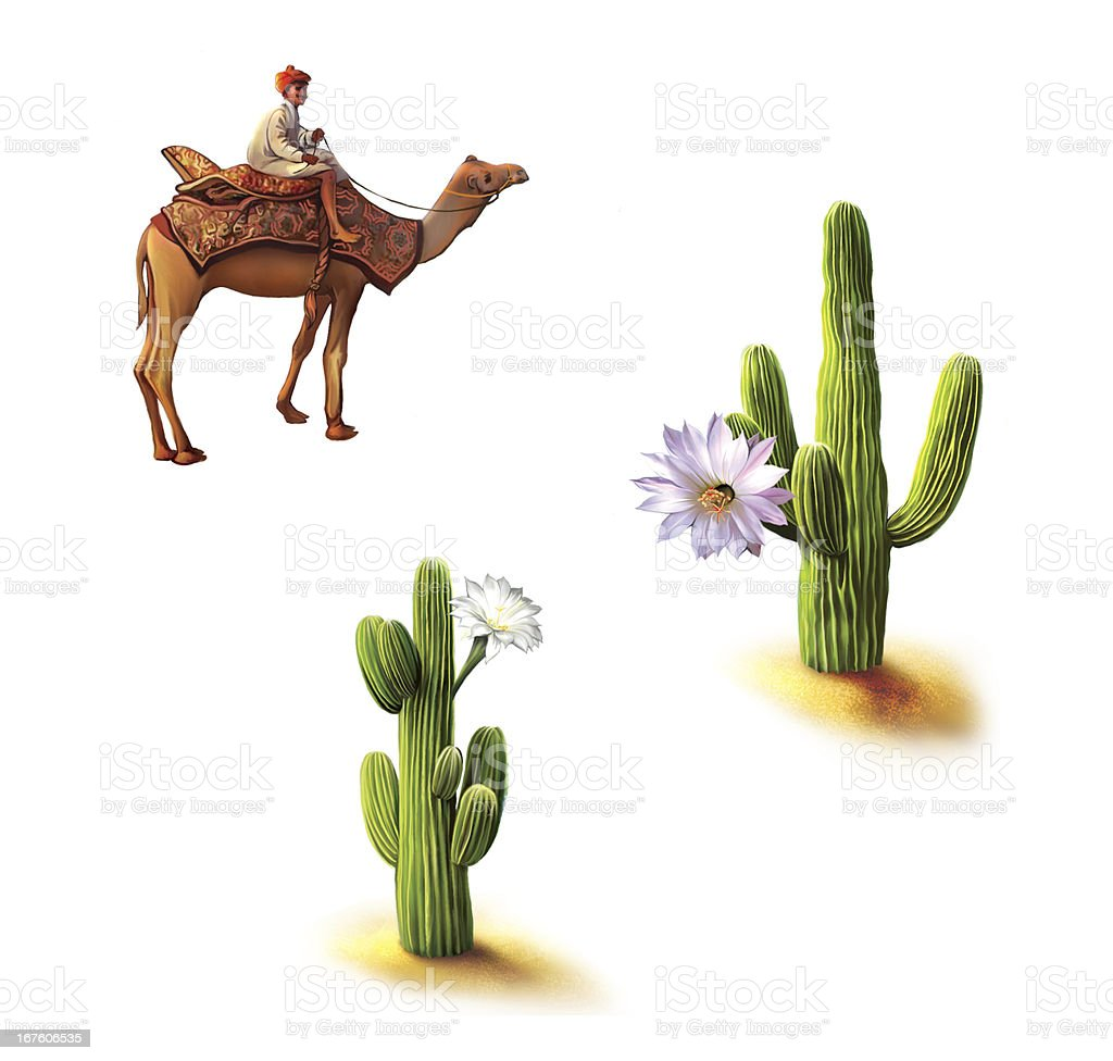Desert, Bedouin on camel, saguaro cactus with flowers stock photo