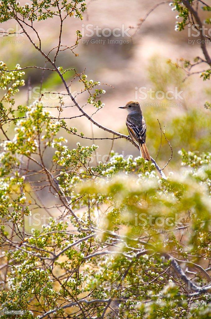 Desert Bird on a Tree stock photo