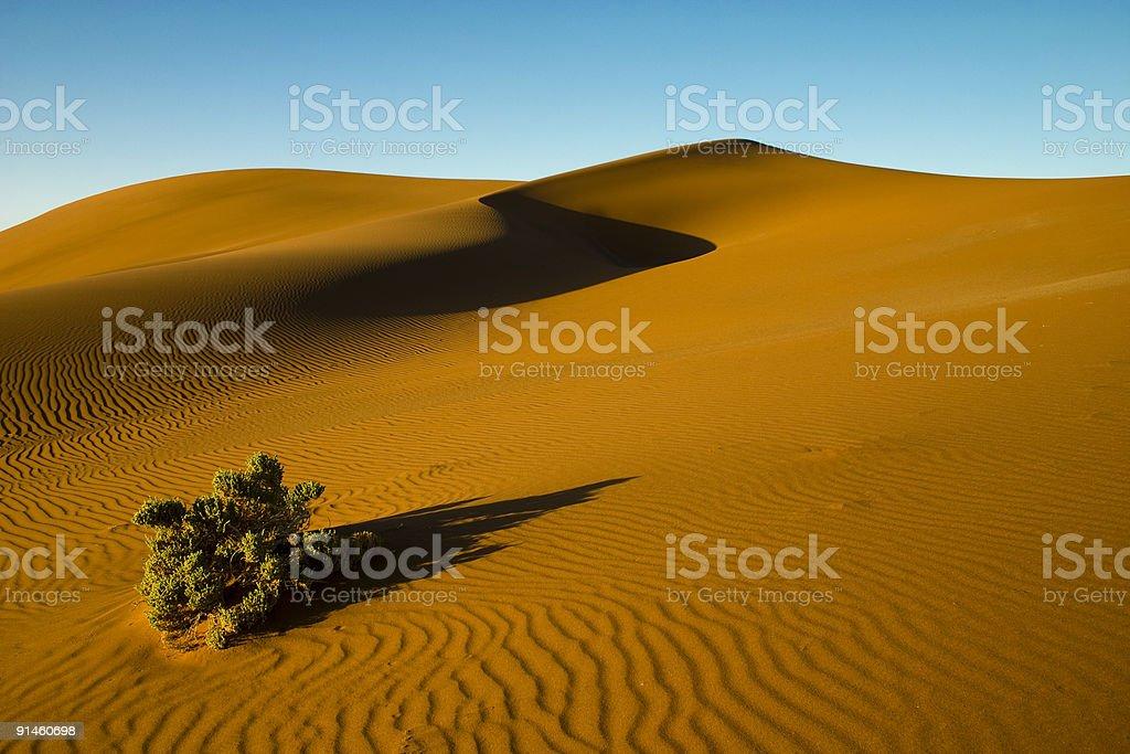 Desert bush stock photo