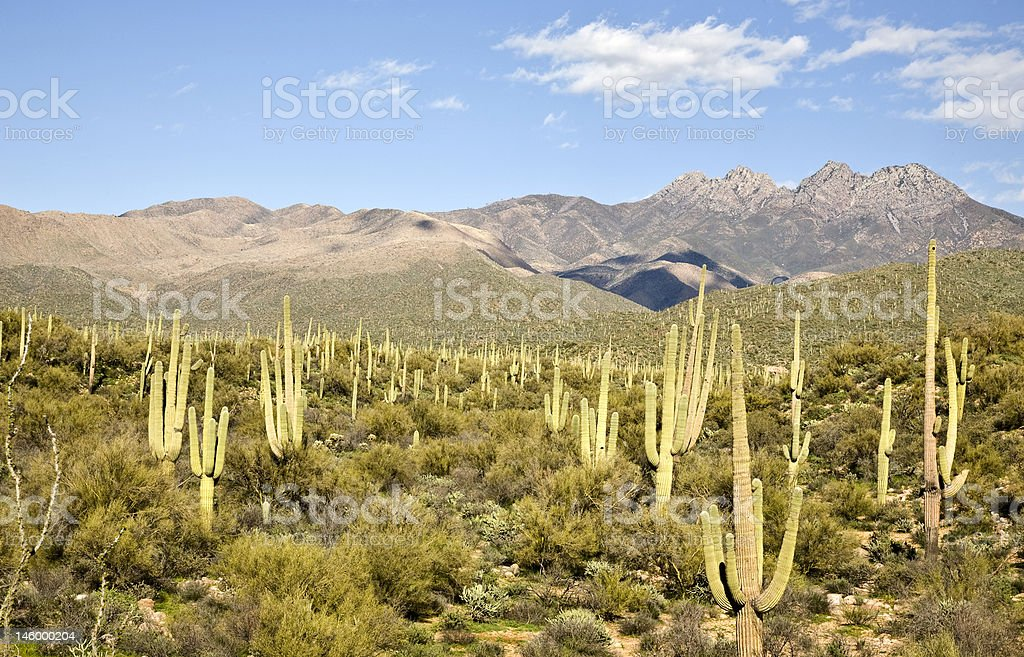 Desert Cactus and Mountains royalty-free stock photo