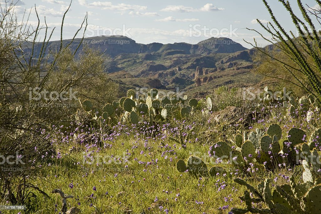 Desert Cactus, flowers and Mountains stock photo