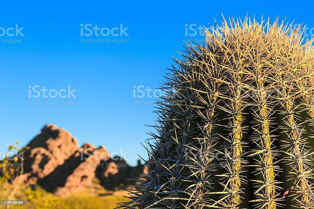 Desert Cactus stock photo