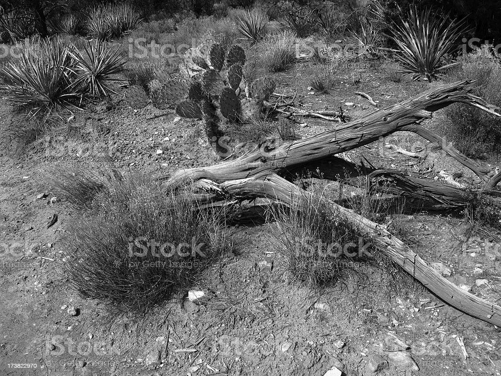 Desert Cactus Yucca Tumbleweed  Black And White stock photo