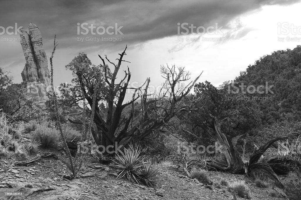Desert Chaparral Landscape Storm Sky stock photo