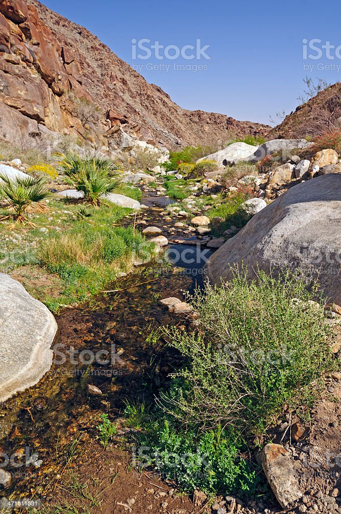 Desert Creek from a Natural Spring stock photo