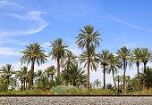 Desert Date Farm