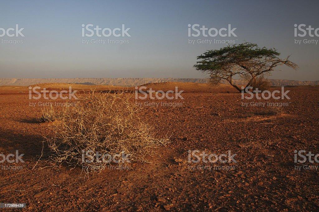 Desert Dawn royalty-free stock photo
