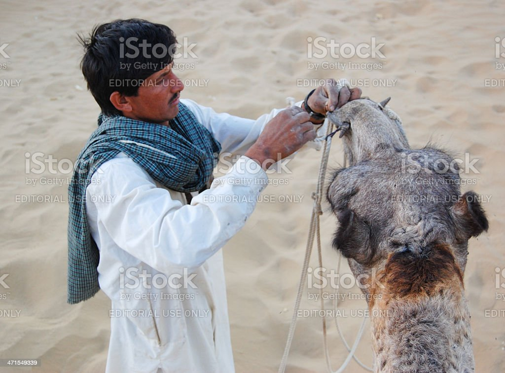 Desert dweller looking after his camel. royalty-free stock photo