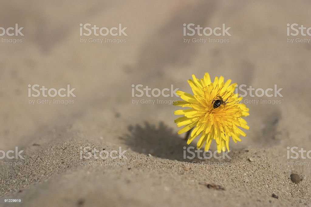 Desert flower and insect stock photo