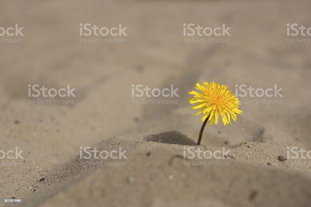 desert flower stock photo