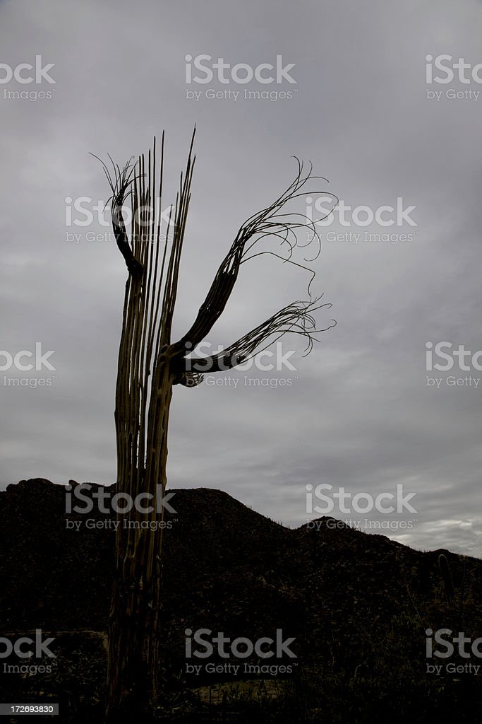 Desert Ghost royalty-free stock photo