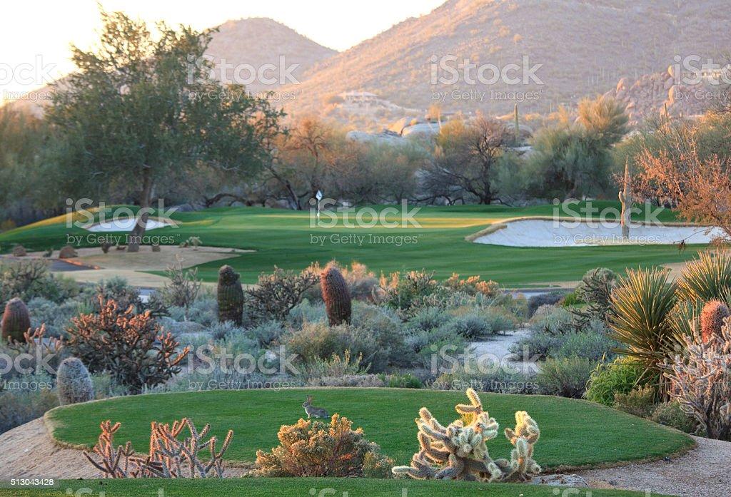 Desert Golf Course in Scottsdale stock photo