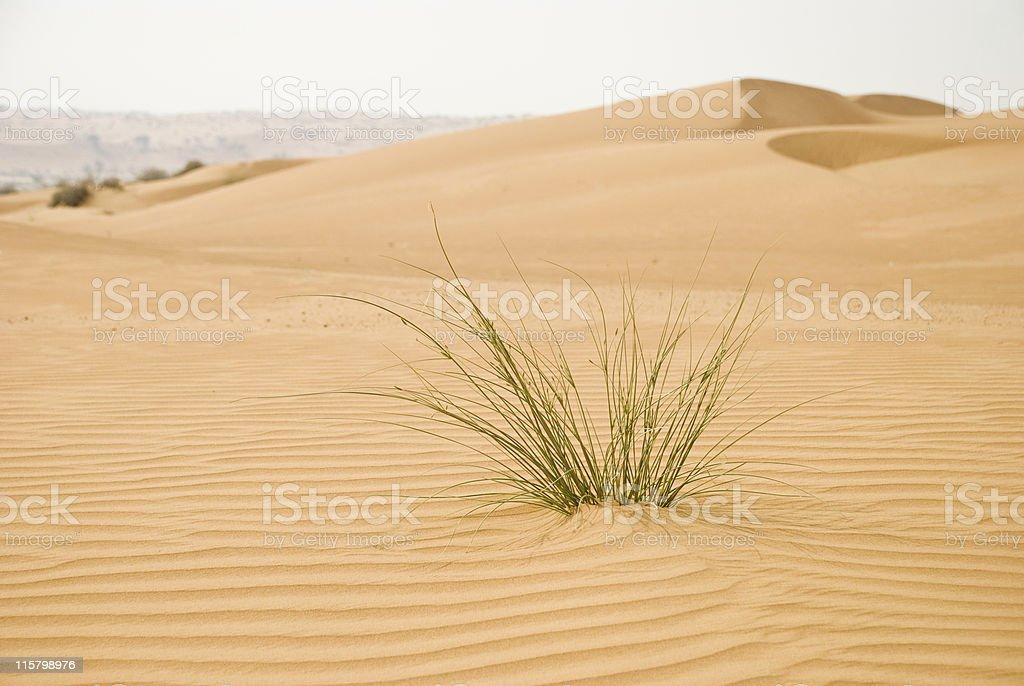Desert grass stock photo
