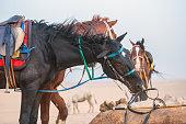 Desert horse stall