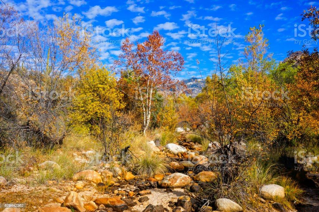 Desert in Fall stock photo