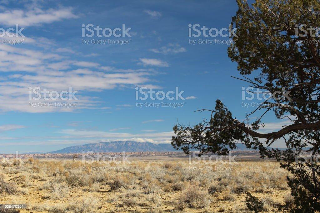Desert Juniper with Sandia Mountains stock photo