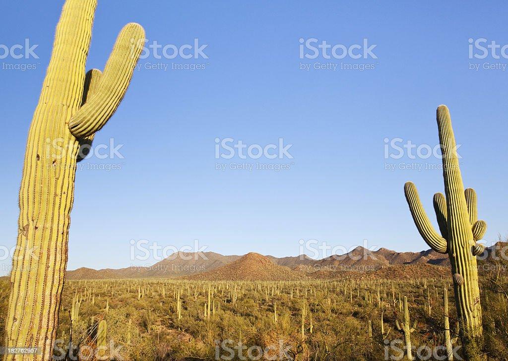 Desert Landscape and Saguaro Cactus royalty-free stock photo