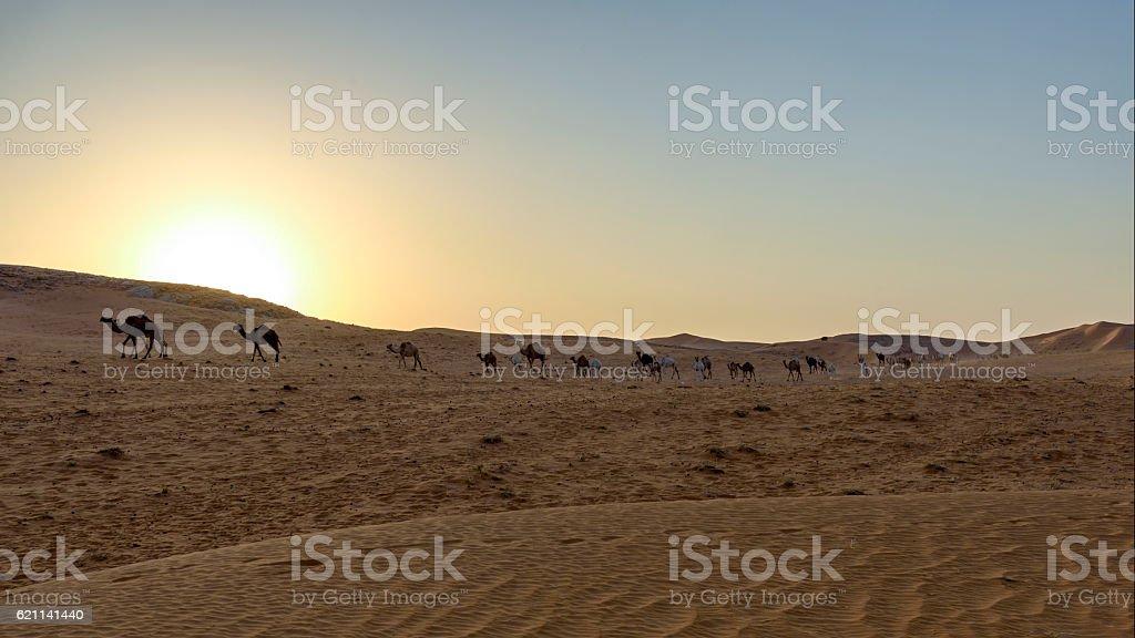 Desert landscape: dunes and camels at sunset stock photo