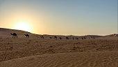 Desert landscape: dunes and camels at sunset