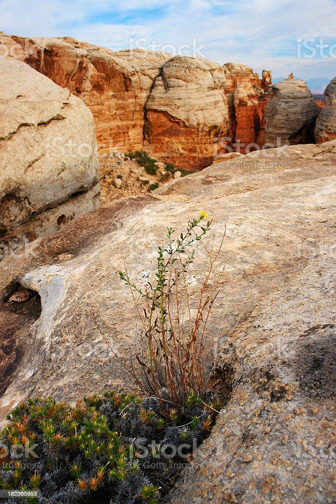 desert landscape flower sandstone rock formation stock photo