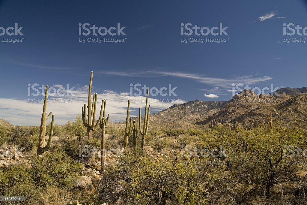 Desert Landscape - Group of Cactus royalty-free stock photo