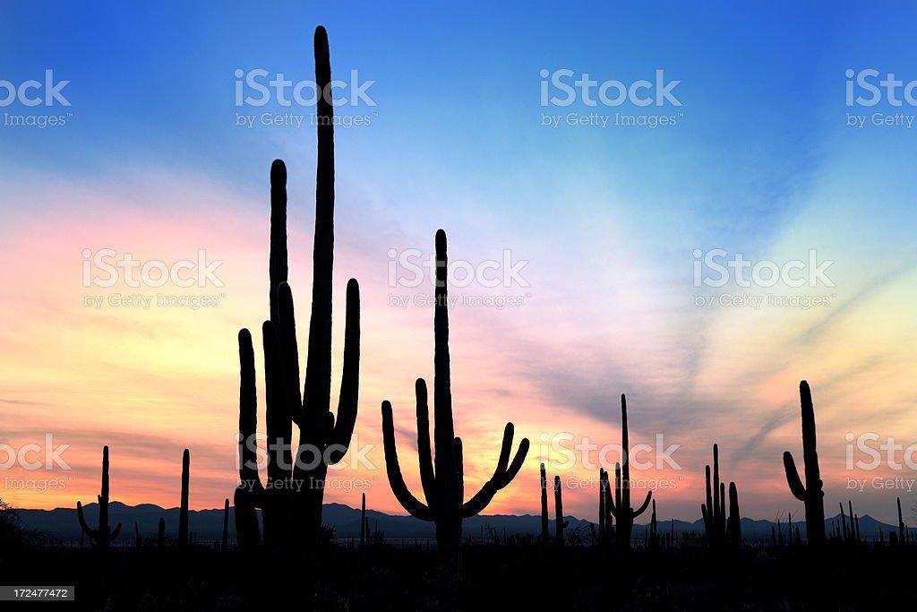 Desert landscape in sunset royalty-free stock photo