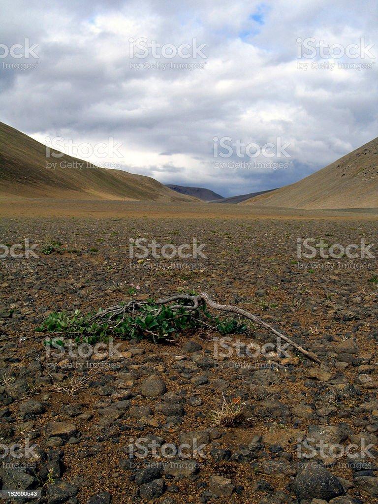 Desert Landscape: Life in a Lonely Desert stock photo
