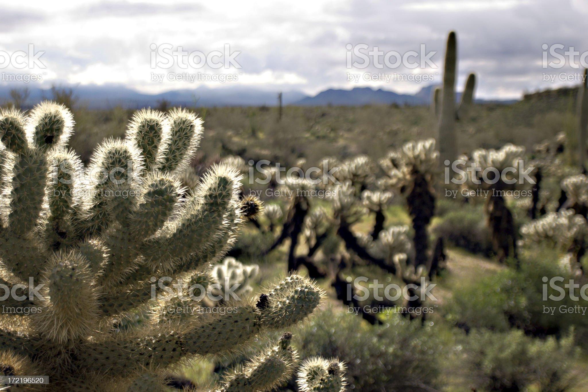 Desert Landscape royalty-free stock photo