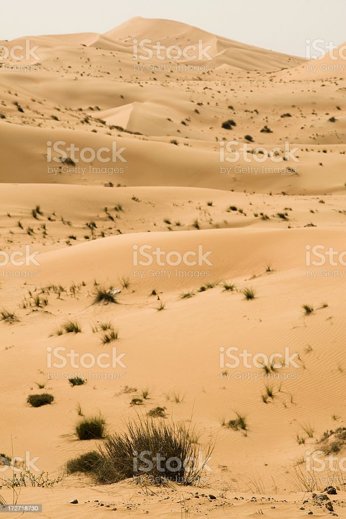 Desert Landscape stock photo