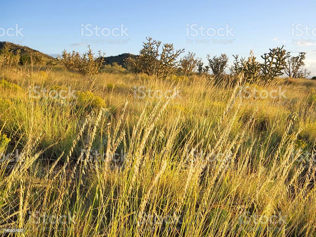 desert landscape sunset stock photo