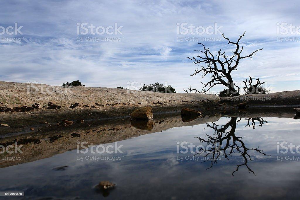 desert landscape water tree reflection sky stock photo