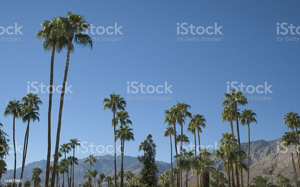 Desert landscape with palm trees stock photo