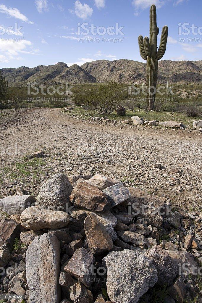 Desert Landscape With Saguaro Cactus royalty-free stock photo