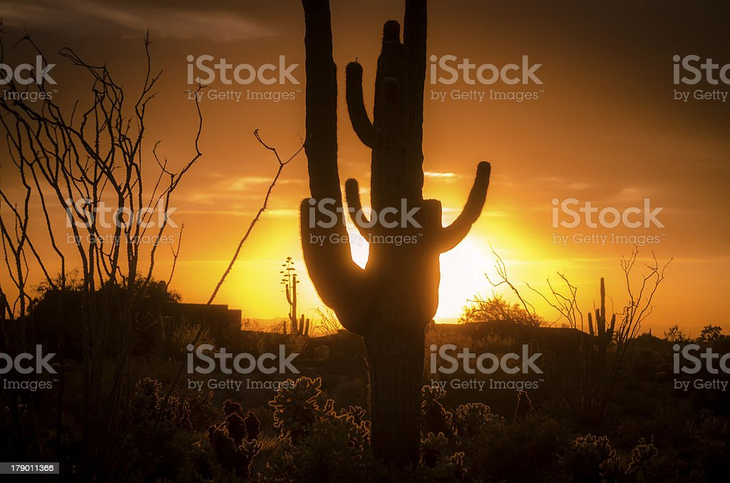 Desert landscape with saguaro in foreground royalty-free stock photo
