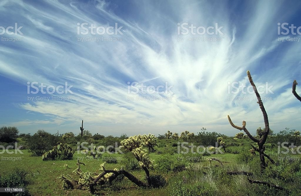 Desert Landscape_2 royalty-free stock photo