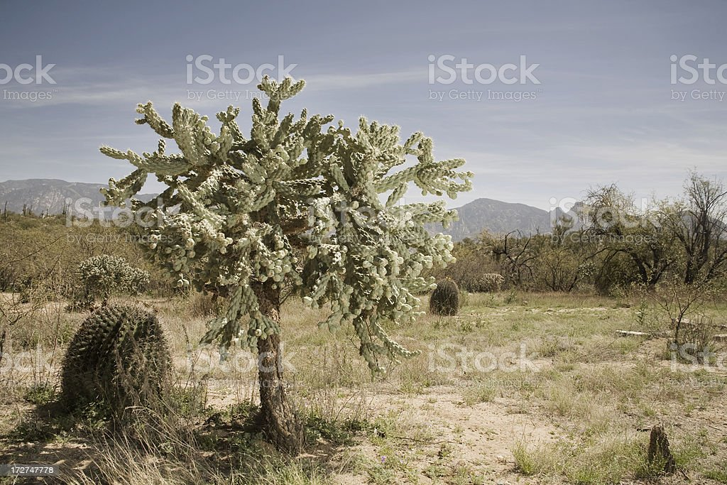 Desert Life stock photo