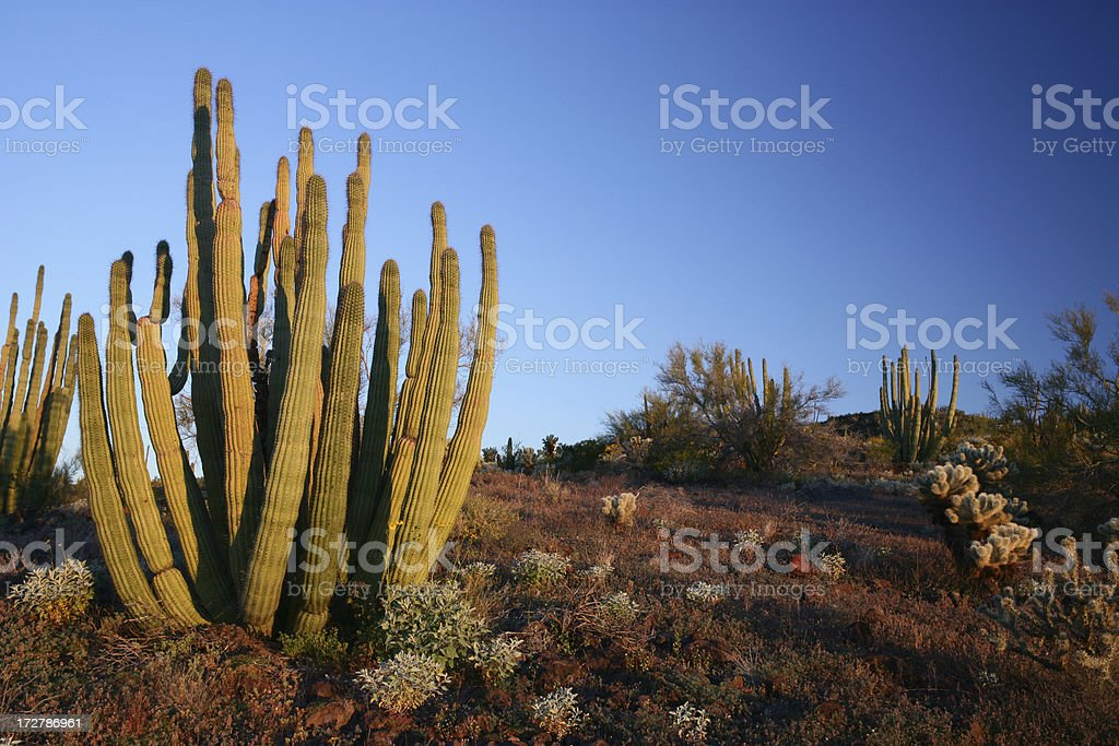 Desert Morning stock photo