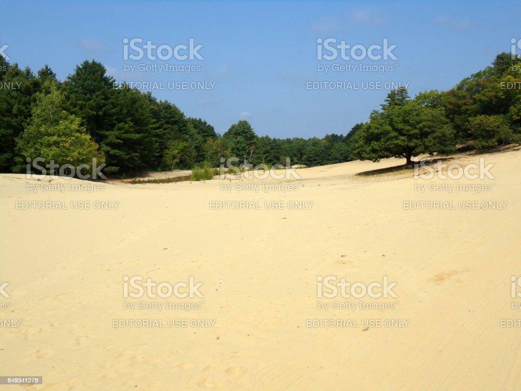 Desert Oak Tree stock photo