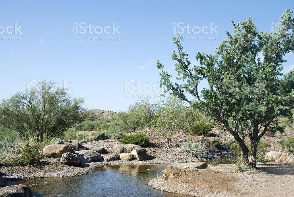 Desert Oasis royalty-free stock photo