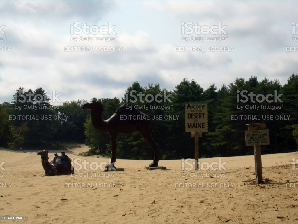 Desert of Maine's Welcoming Camels stock photo