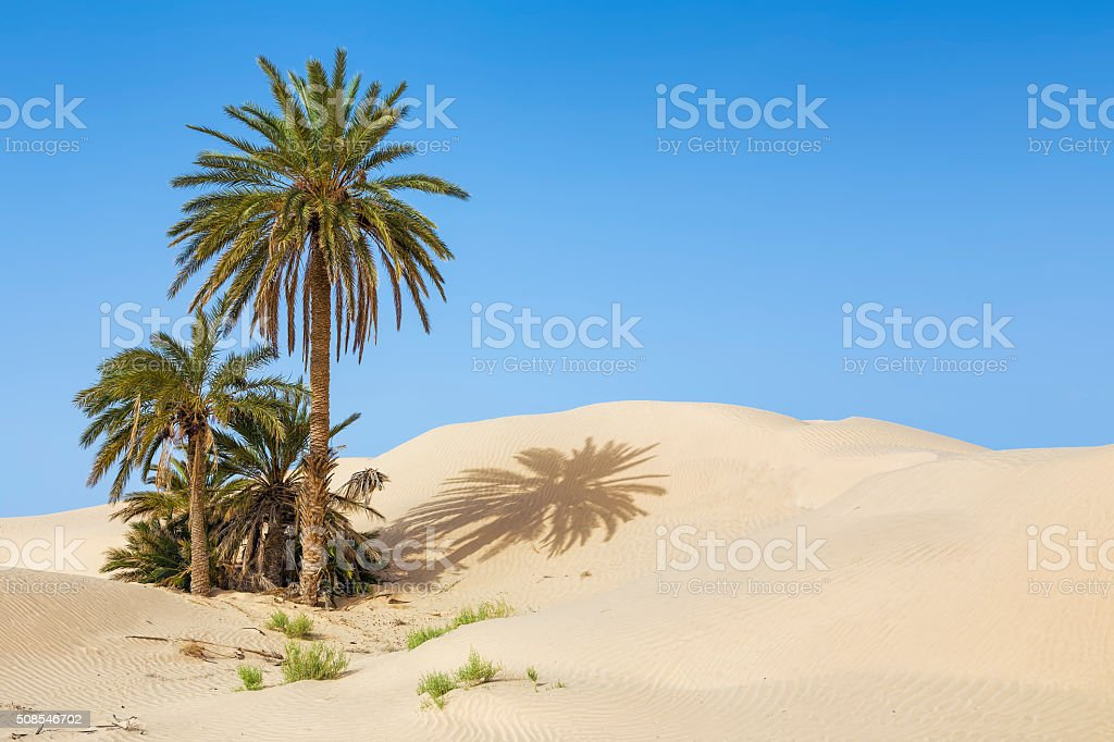 Desert Palm oasis of Zaafrane / Tunisia / North Africa stock photo