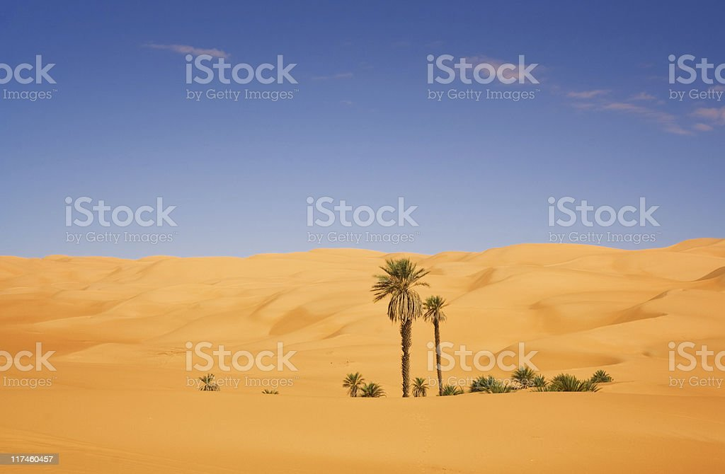Desert Palm royalty-free stock photo